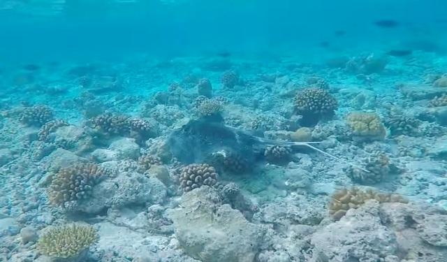 домашний риф Biyadhoo кто водится