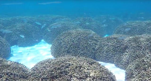 ближний риф на Тодду