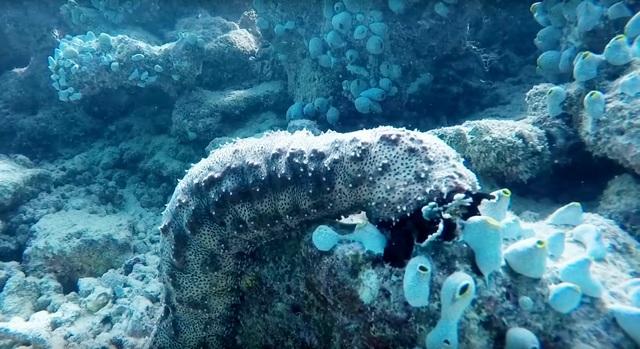 ближний риф зверье