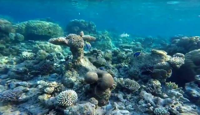Nika Island домашний риф