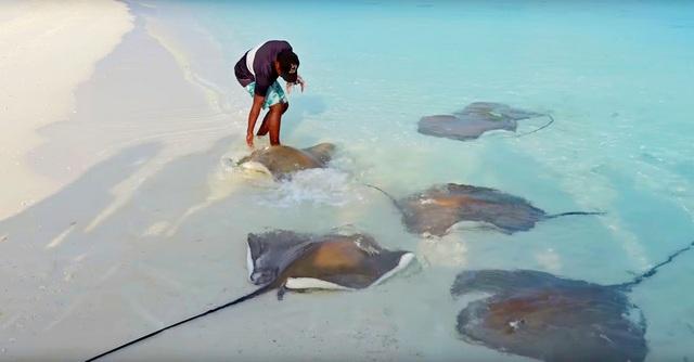 кормление скатов и акул