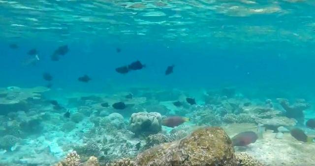 домашний риф острова Расду