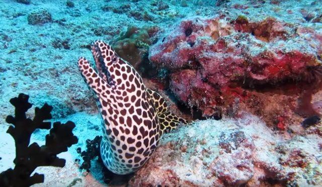 опасно ли купаться на Мальдивах