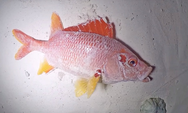 рыбалка на локальных островах
