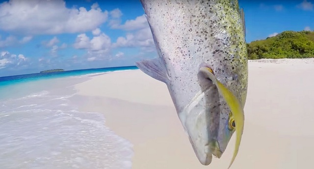 рыбалка на обитаемом острове