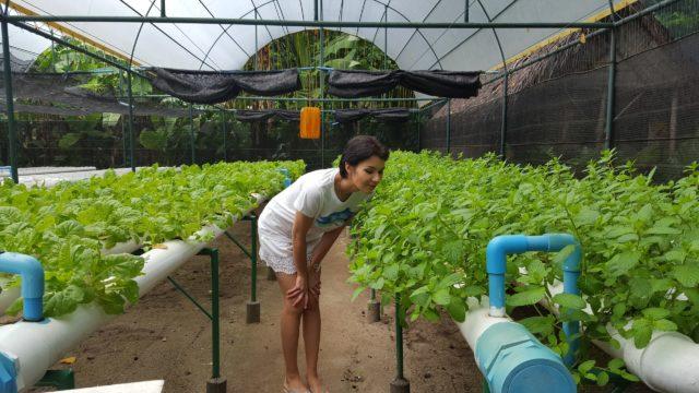 на острове выращивают овощи для ресторанов отеля
