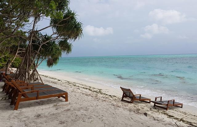 водоросли на бикини-пляже