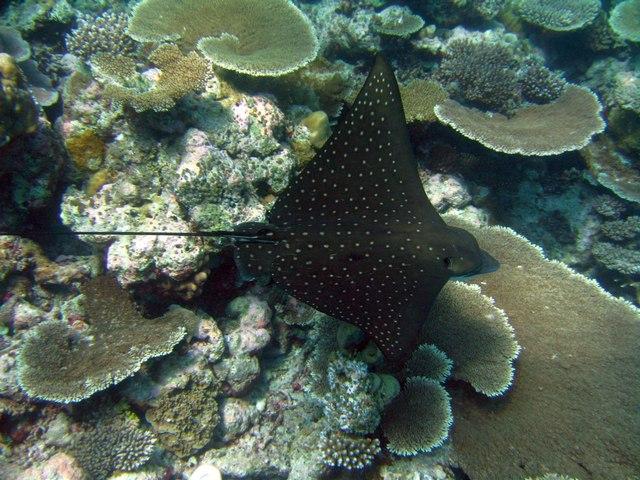 риф отеля Fihalhohi Island Resort