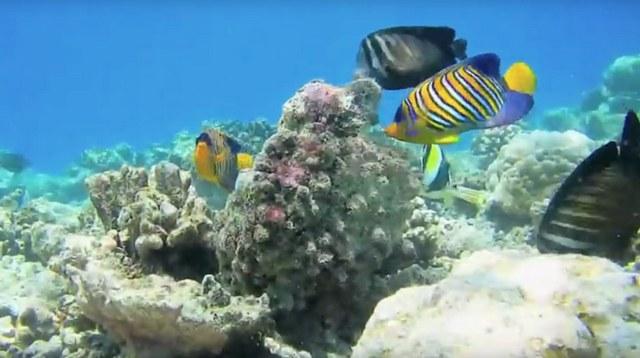 MALAHANI KUDA BANDOS домашний риф