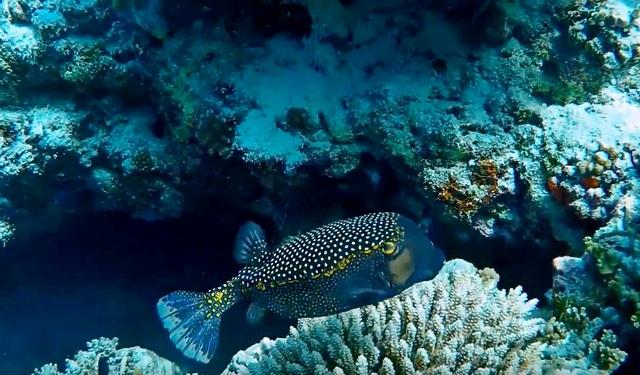 Снорклинг на домашнем рифе Оманду (Omadhoo)