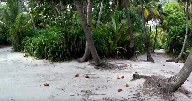 чистый и зеленый остров