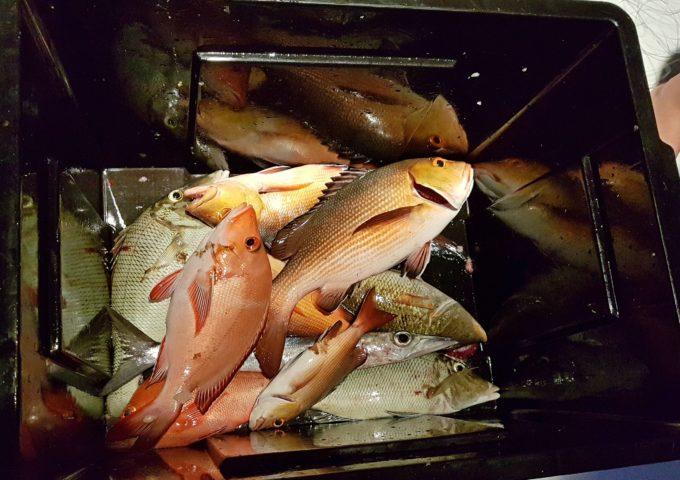 vakkaru рыбалка