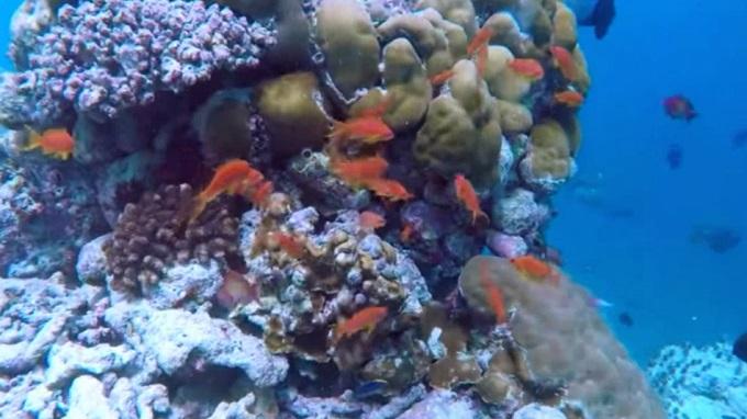 Hurawalhi Island snork