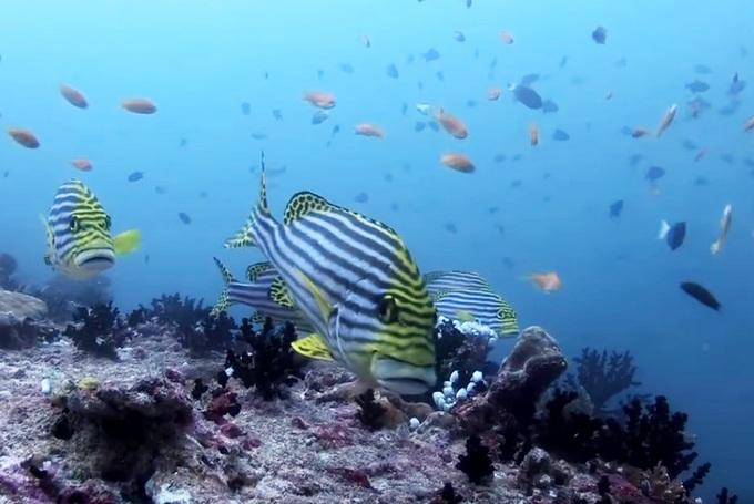 Maldives Kuredu риф
