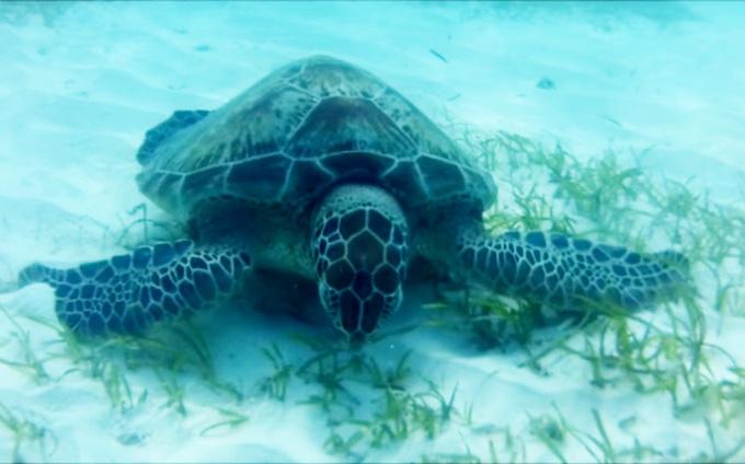 Maldives Kuredu снорк