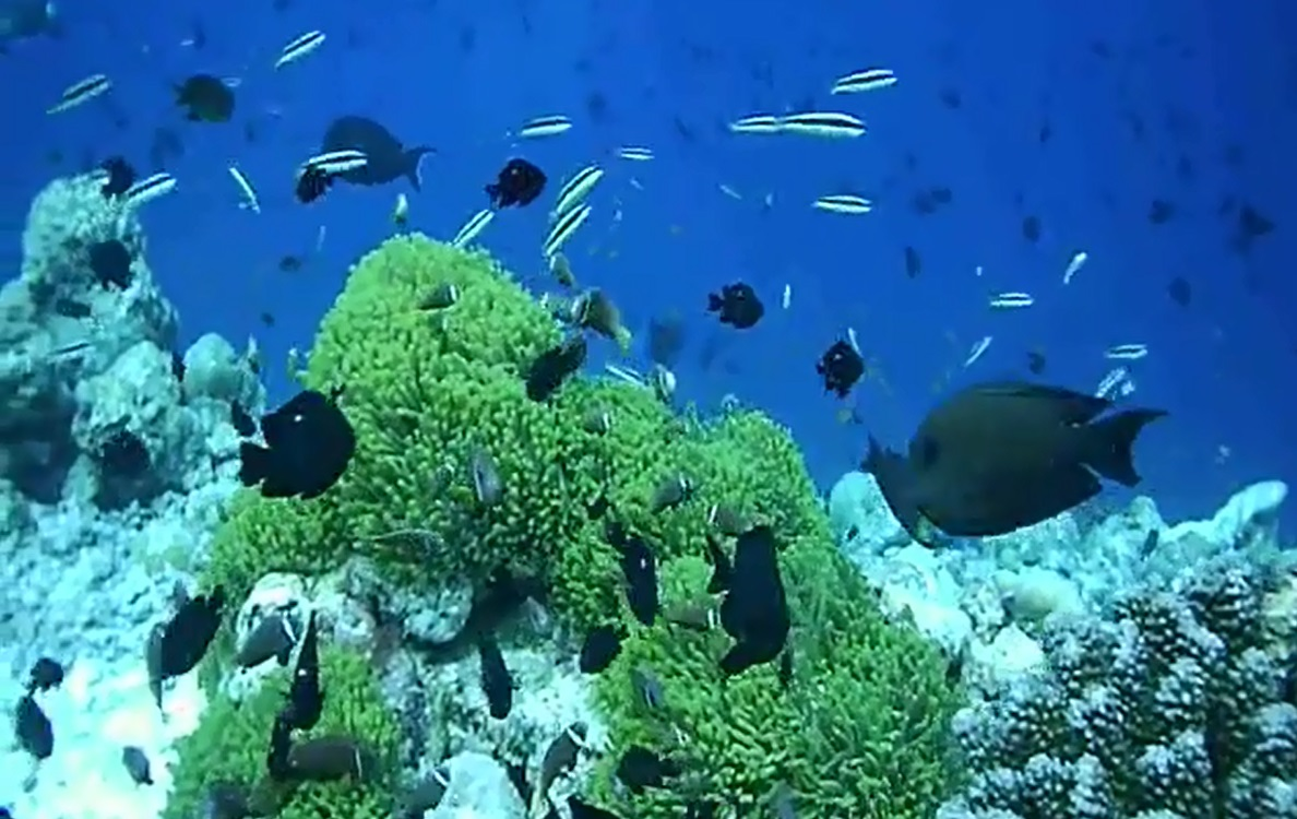 home reef